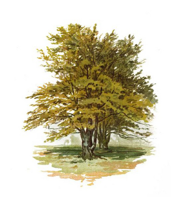 Product picture Trees & How to PAINT them in Watercolours.